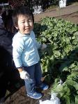小松菜と子ども