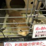 「生後一か月のウサギ」~置手紙~