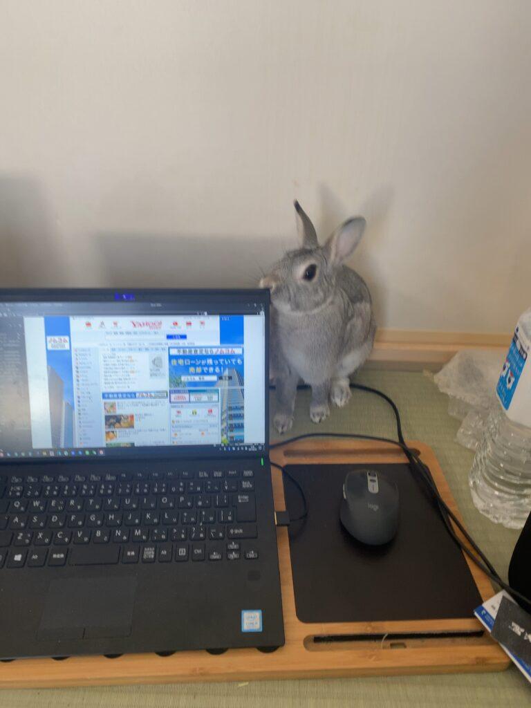 ウサギとノートパソコン